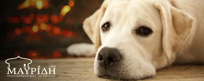 Σκύλος-Μοκέτα-logo